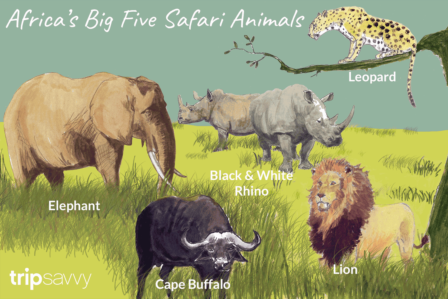 what are the big 5 animals