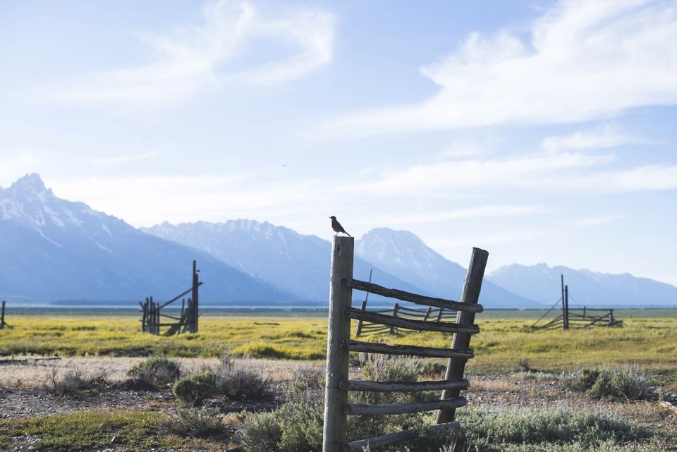 Bird perching on abandoned fence at Grand Teton National Park against cloudy sky