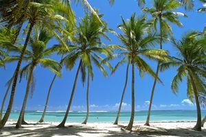 Row of coconut palms on a beach