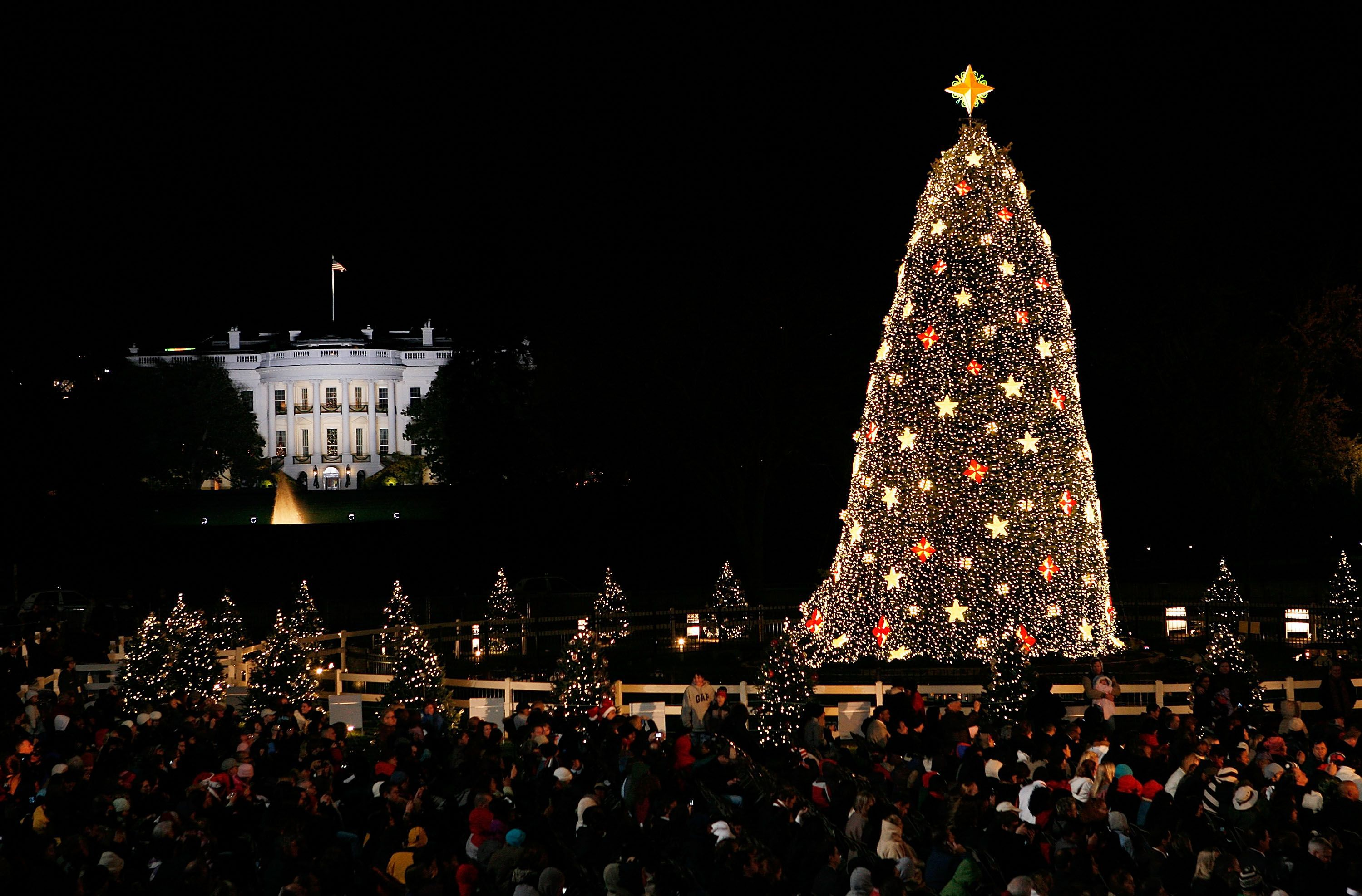 National Christmas tree in front of the White House