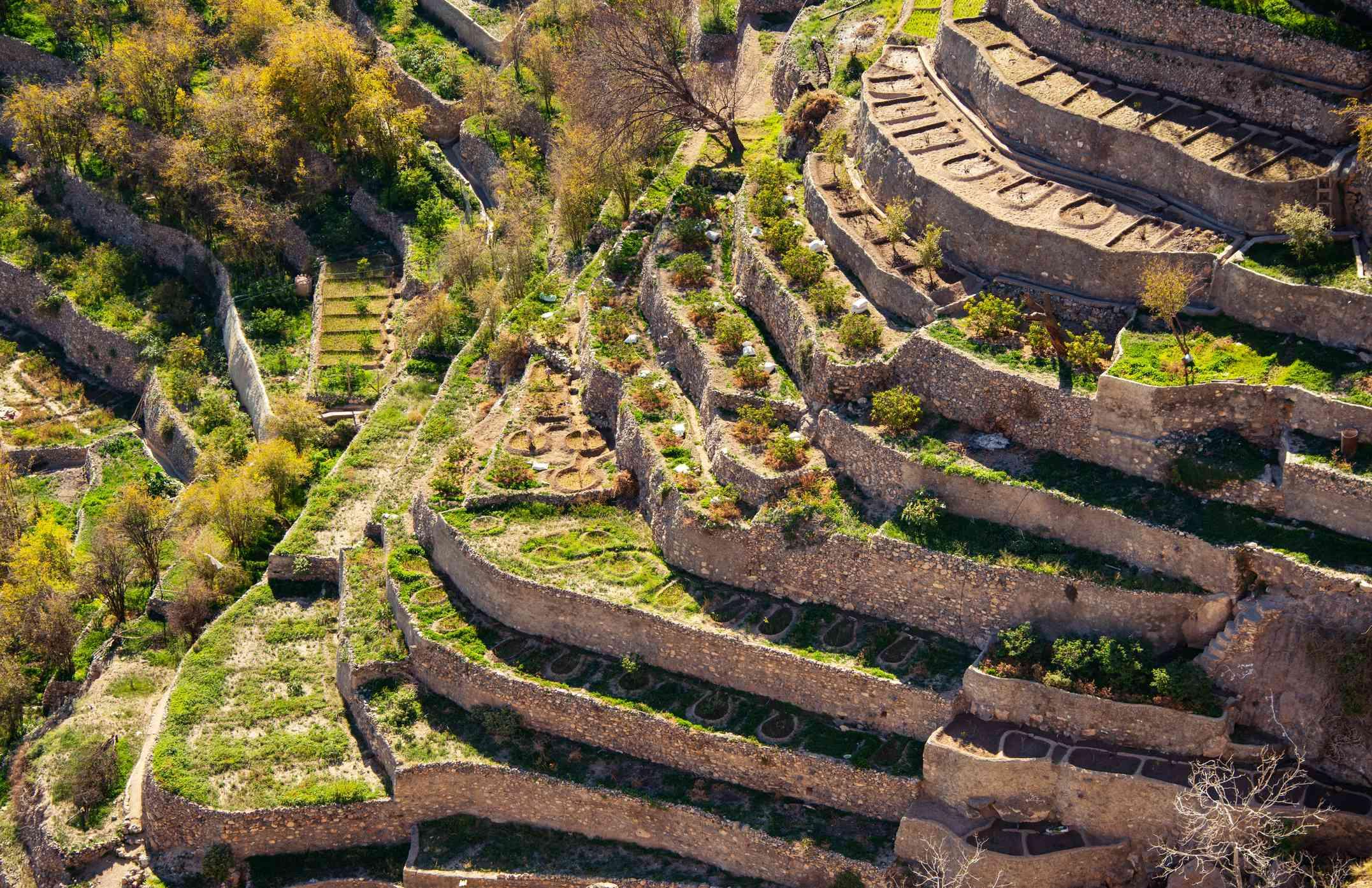Terraced fields on the Sayq Plateau, Oman