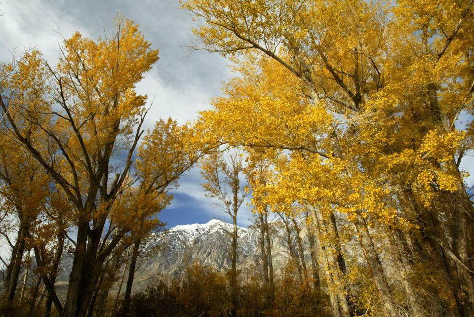 Fall Colors Emerge in the Sierra Nevada Mountains
