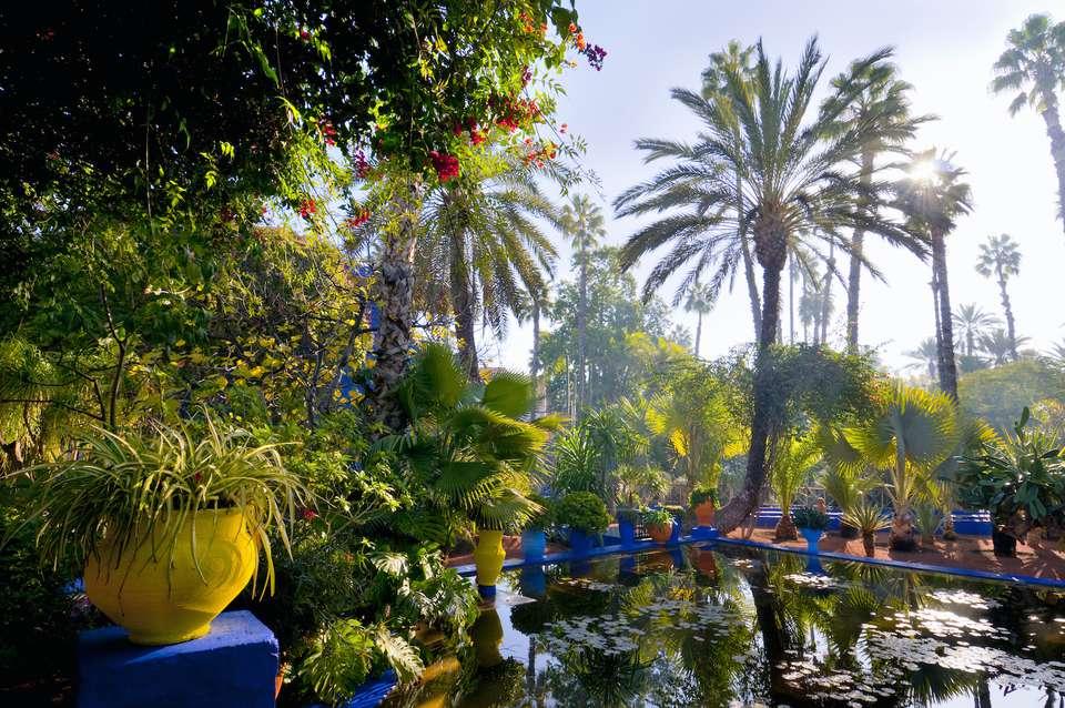 Sun shining through the foliage of Majorelle Garden, Marrakesh
