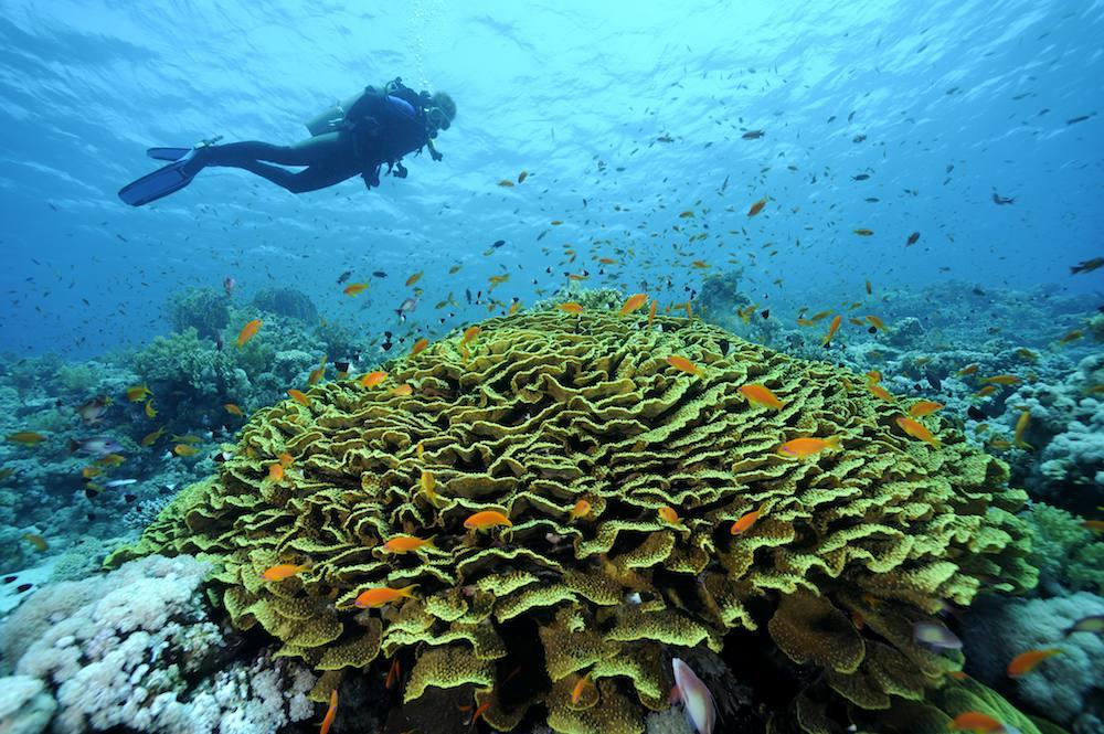 Scuba Diving Red Seas
