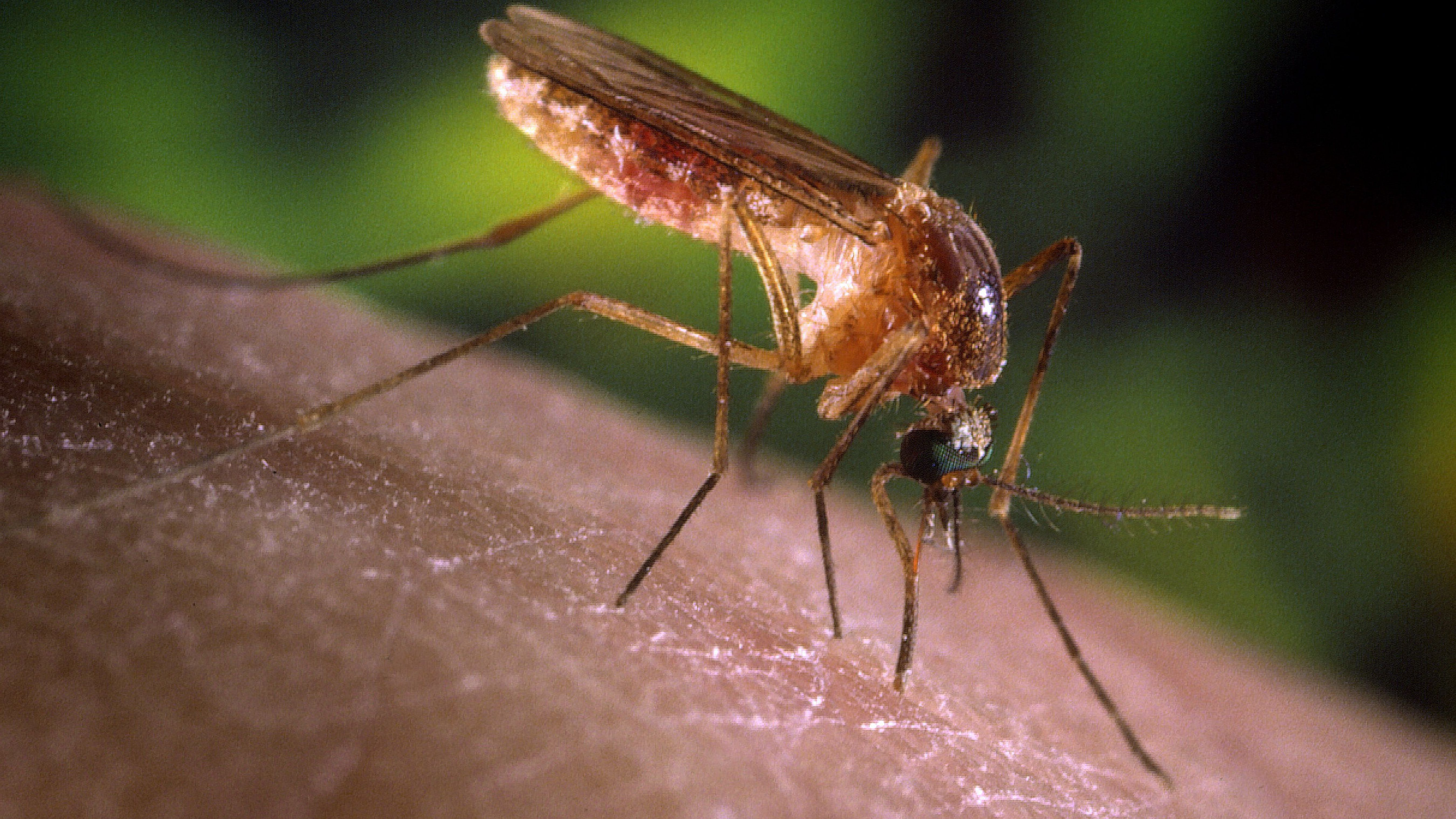 Maine Mosquitoes, Black Flies, Ticks: Protect Yourself