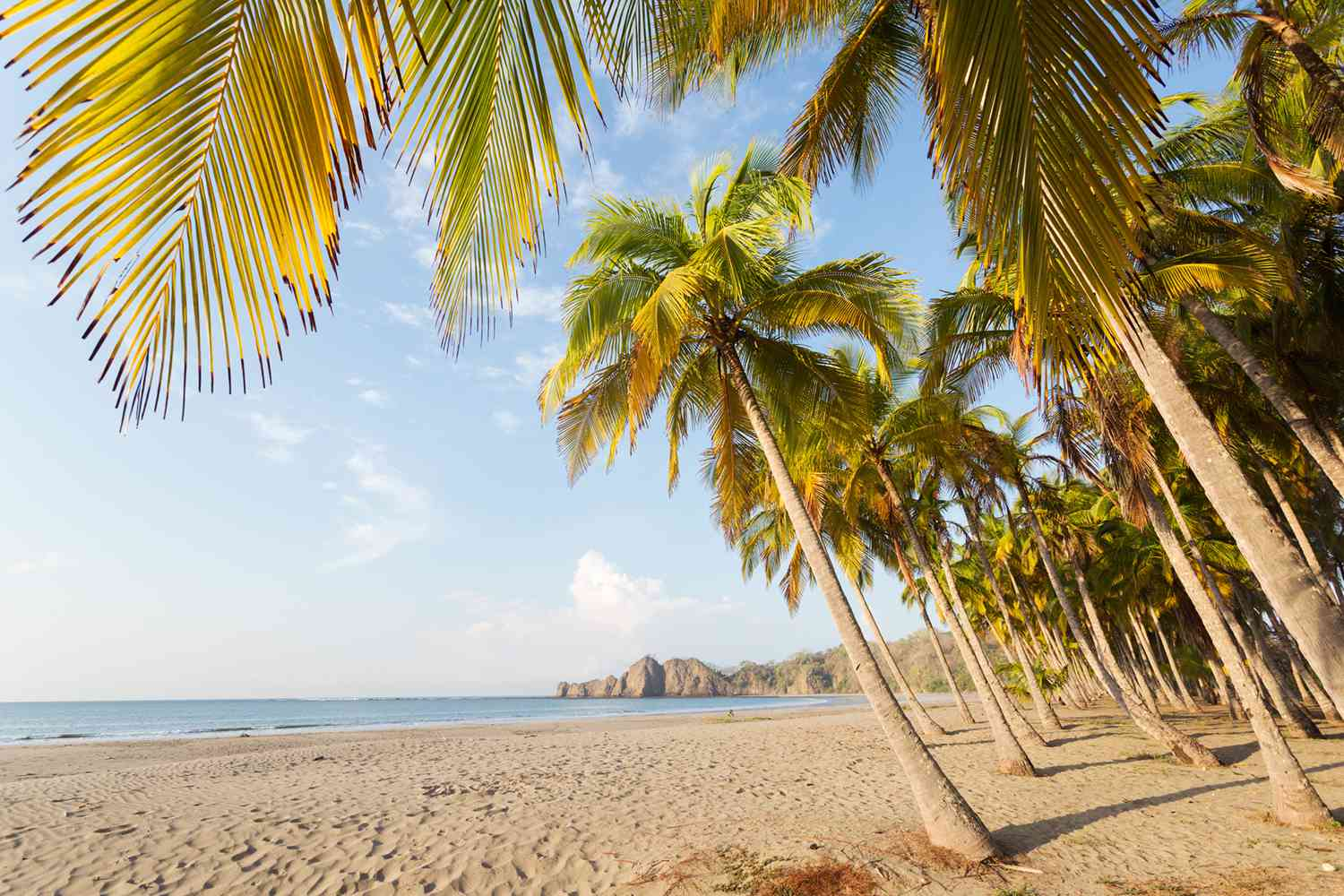 Palm trees on the beach at Playa Carrillo in Costa Rica