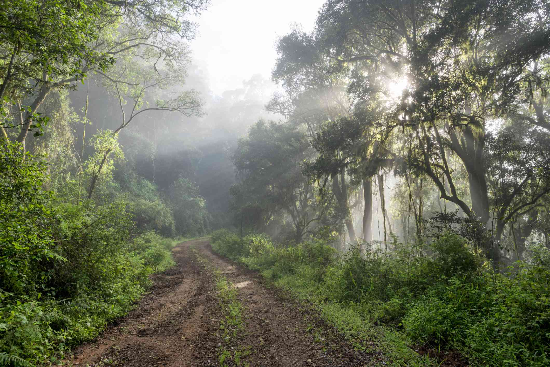 Forest trail in Magoebaskloof, South Africa