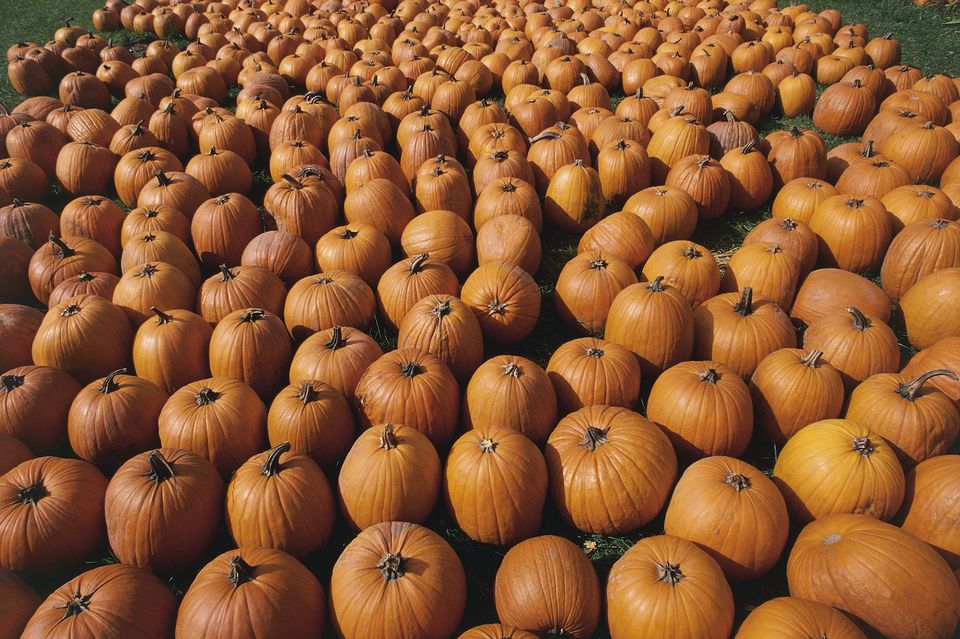 High angle view of a heap of pumpkins, Detroit, Michigan, USA