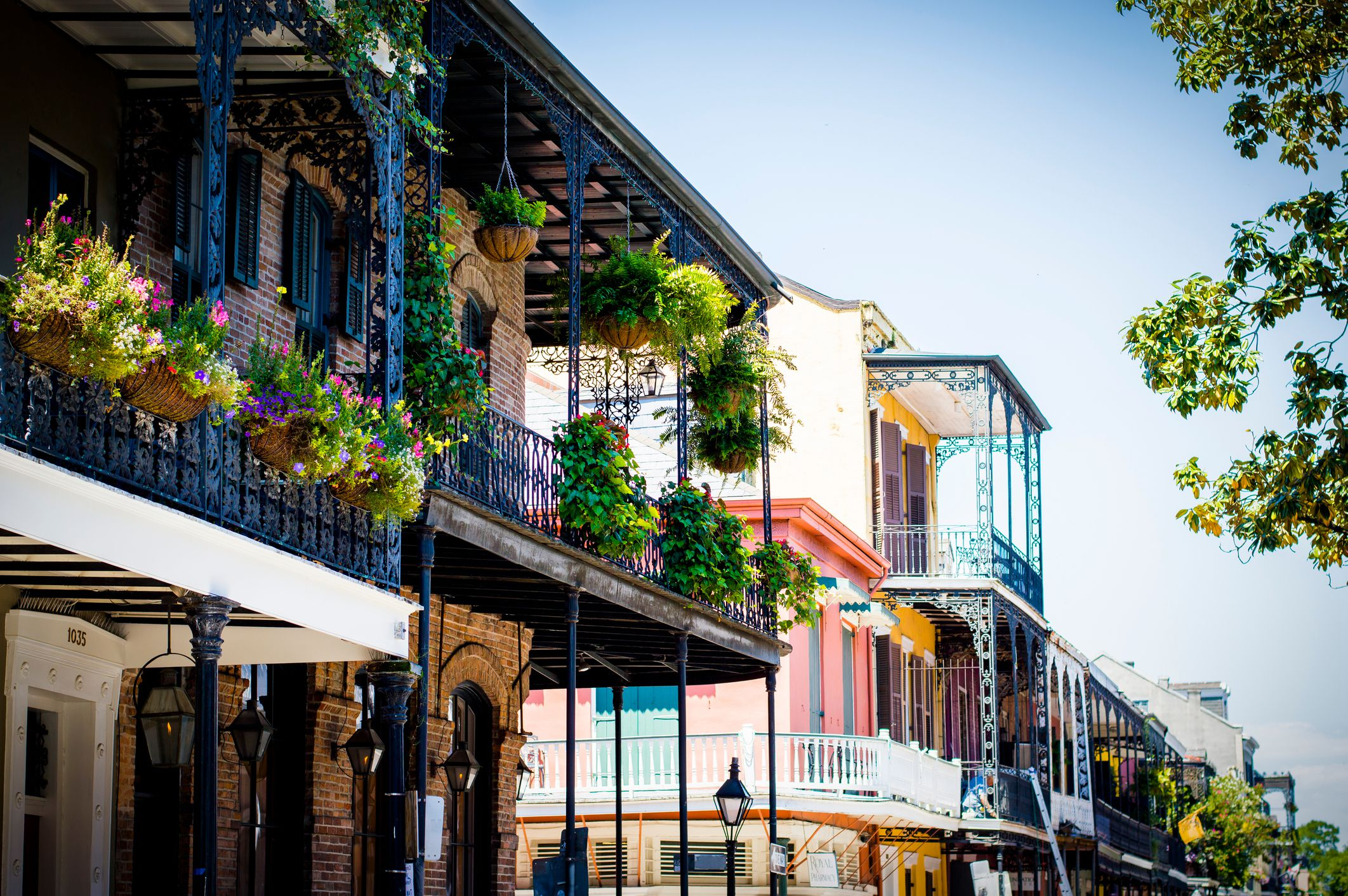Potted plants in balcony of building at French Quarter