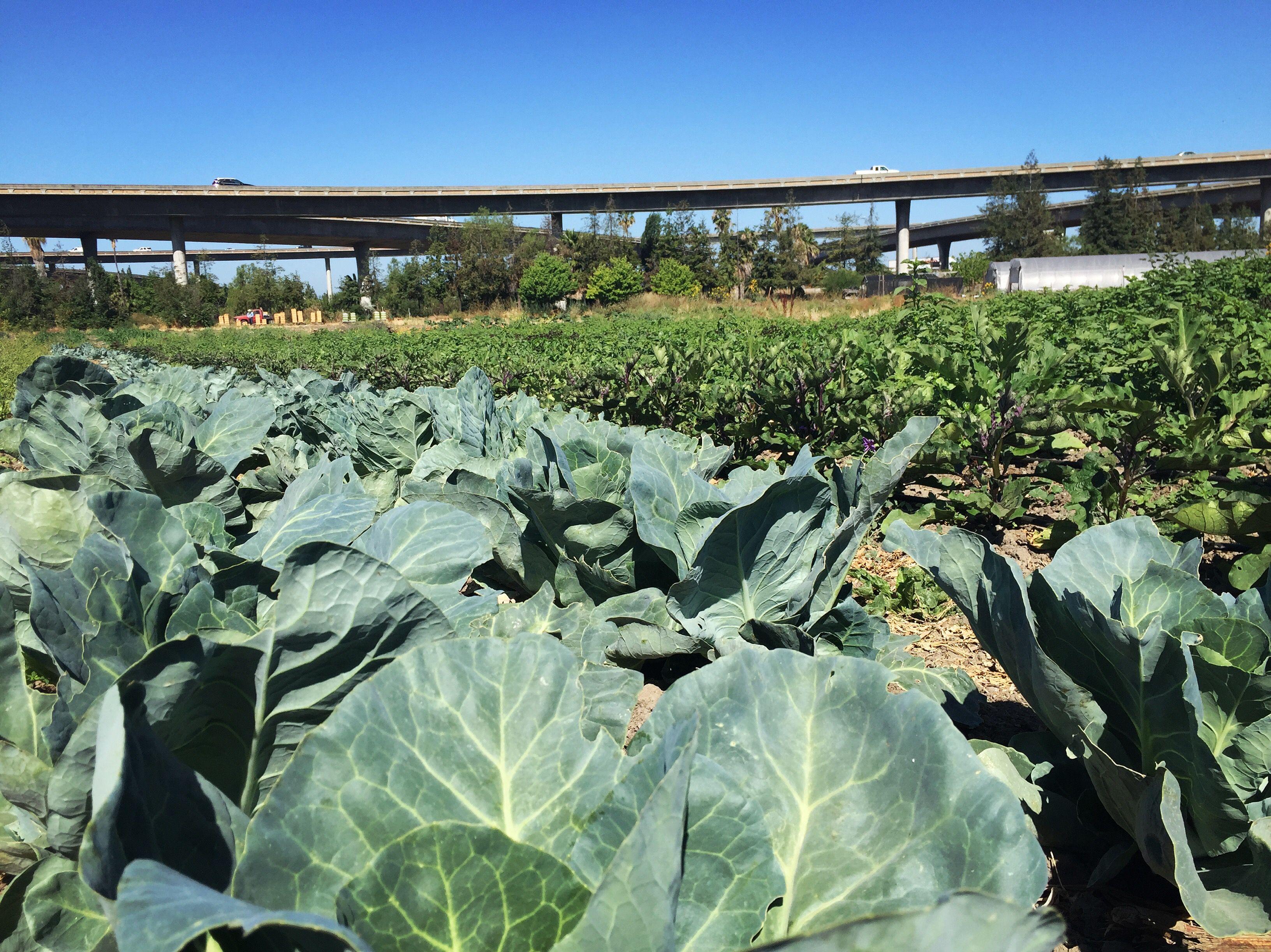 craigslist san francisco bay area farm and garden