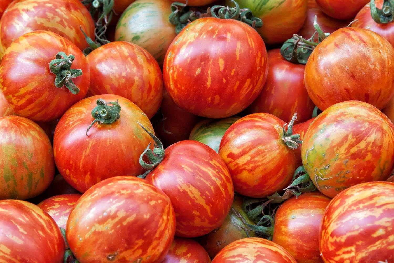 Tomatoes at the San Francisco Farmers Market