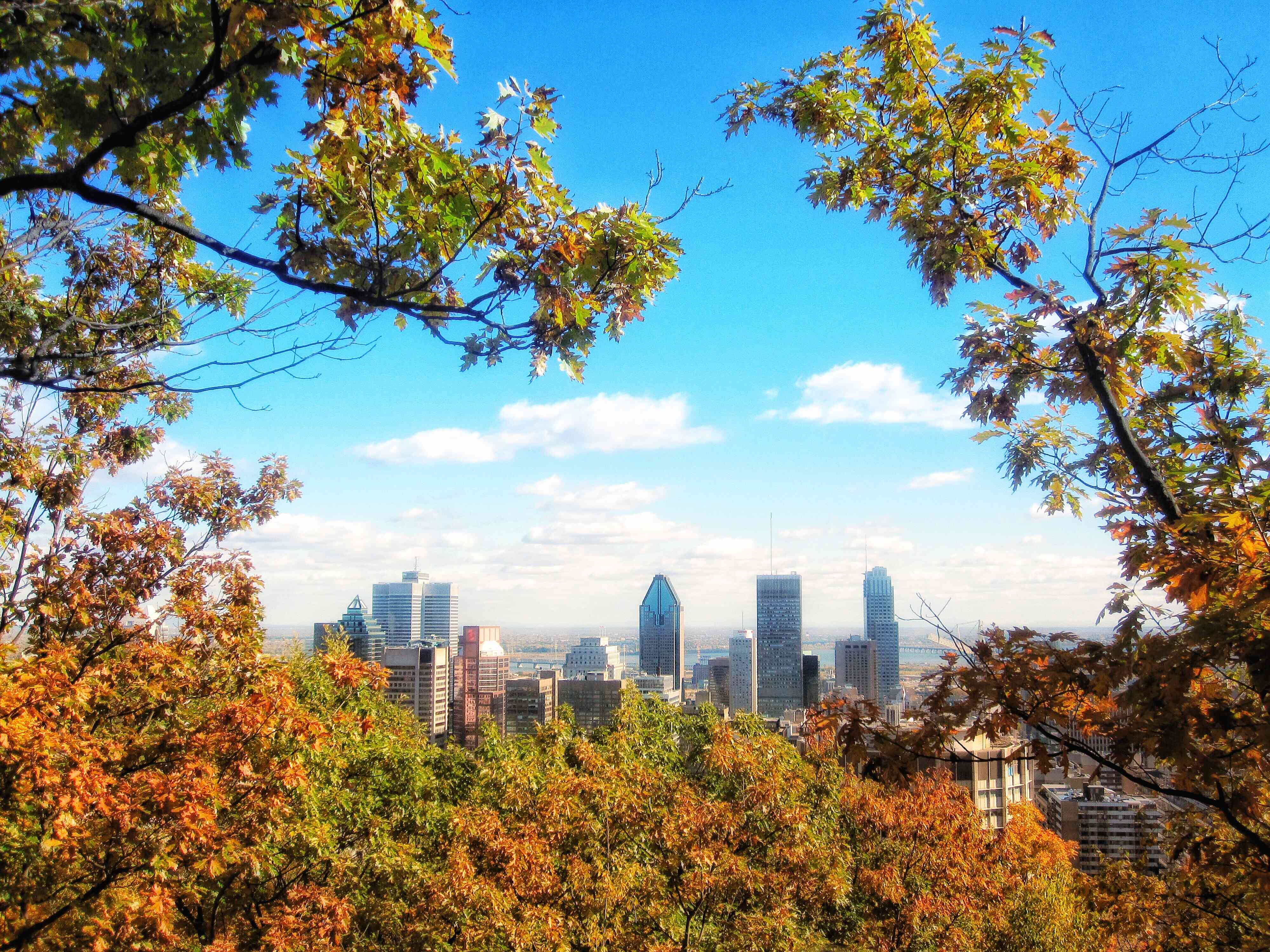 Fall trees from Mount Royal Park in Montreal