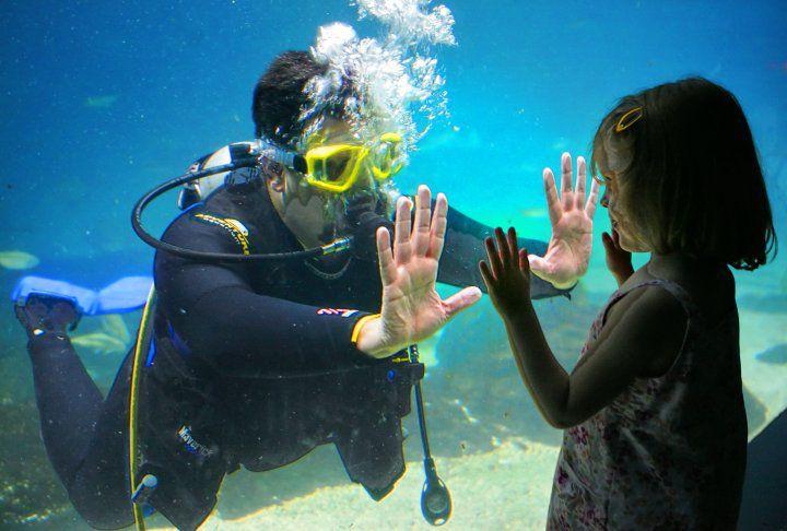 Adventure_Aquarium.jpg