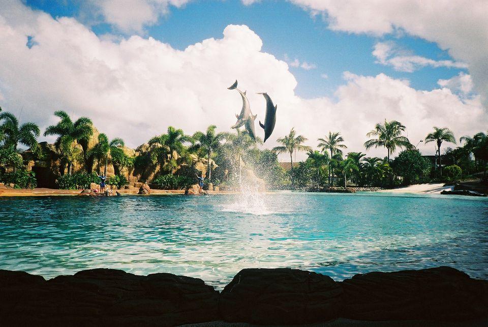 Delfines saltando sobre el agua