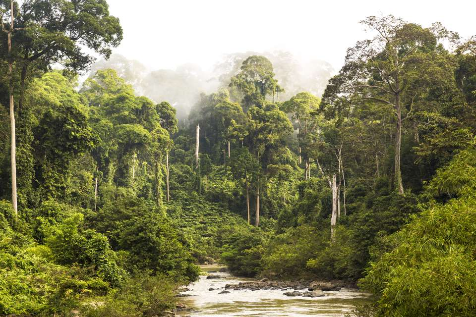 Dense rainforest and a river as seen in national parks in Borneo