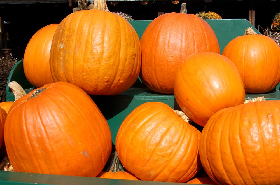 Pumpkins Displayed at a Roadside Stand