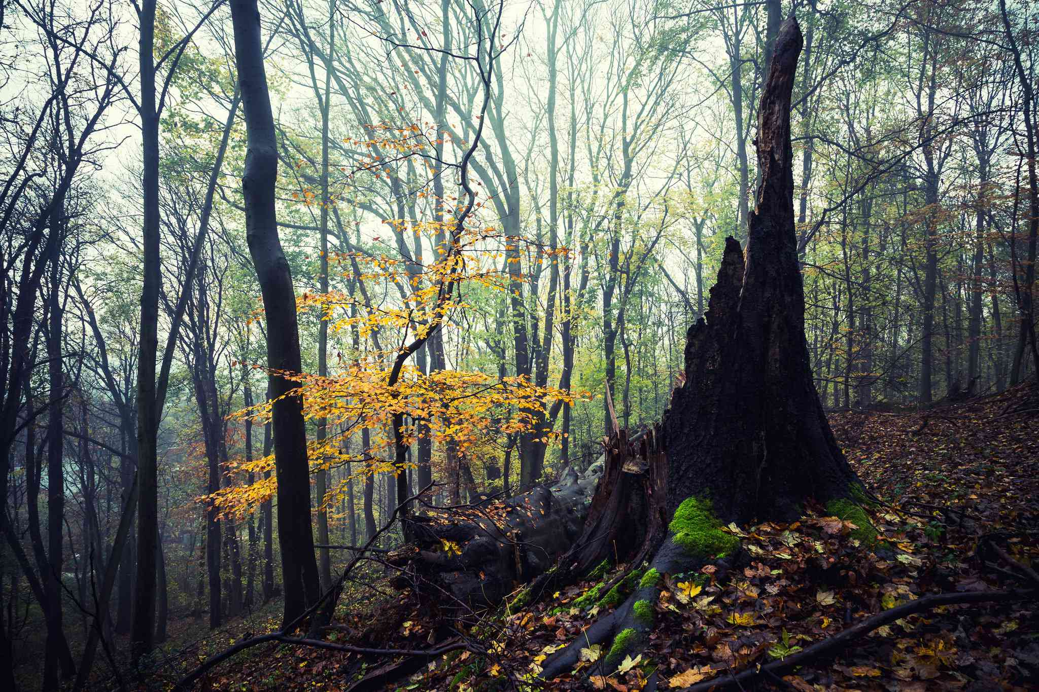 Stadtwald Forest