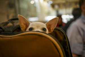 Dog in Luggage at the Airport