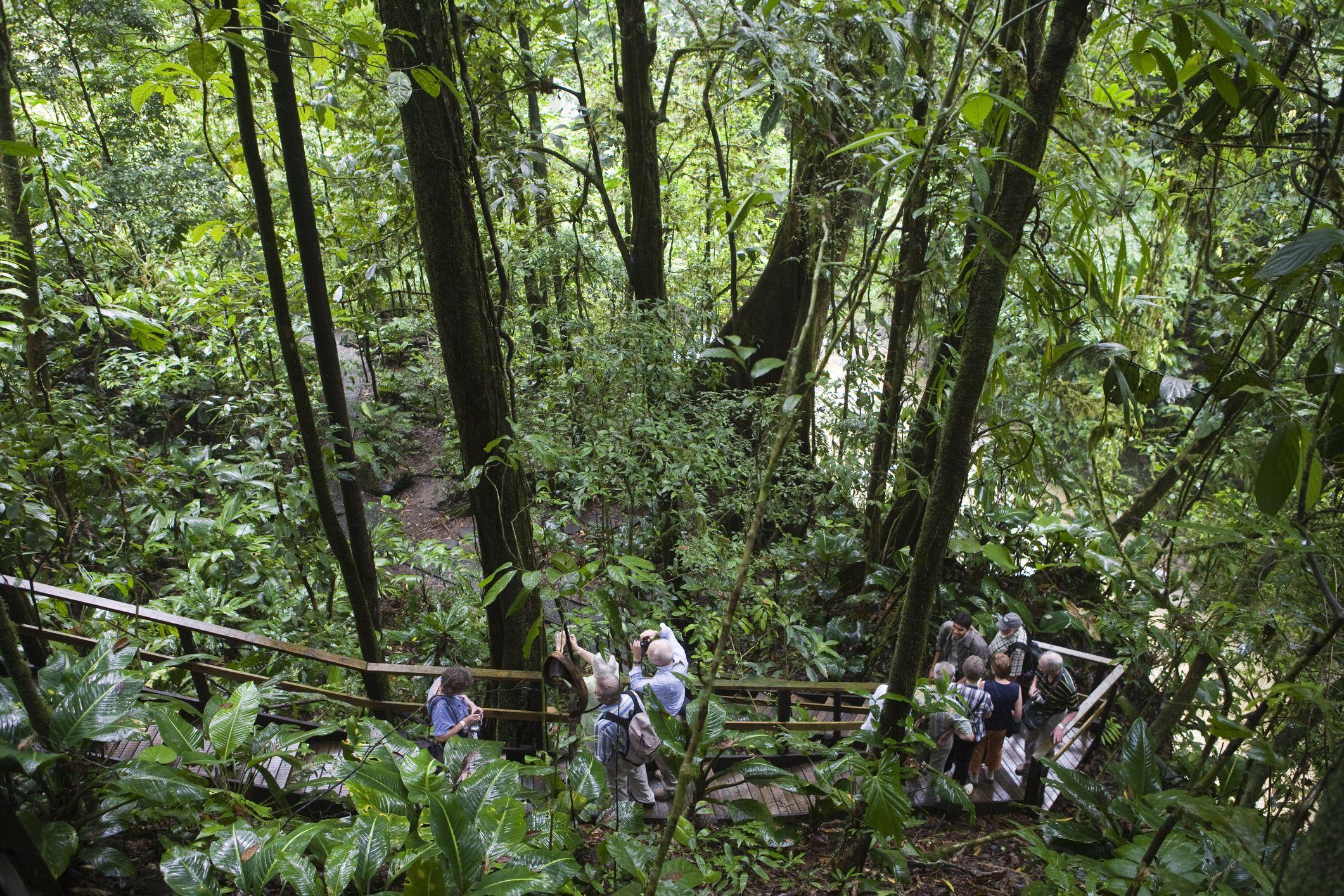 Hikers in Veragua Rainforest Park near Puerto Limon