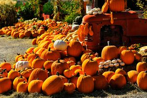 A colorful view of a pumpkin patch