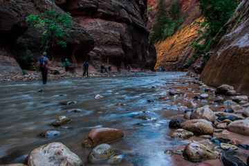 Visitors hiking along a stream in Zion National Park
