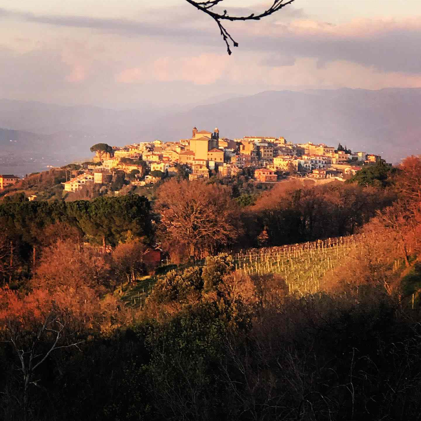 A view of Frascati