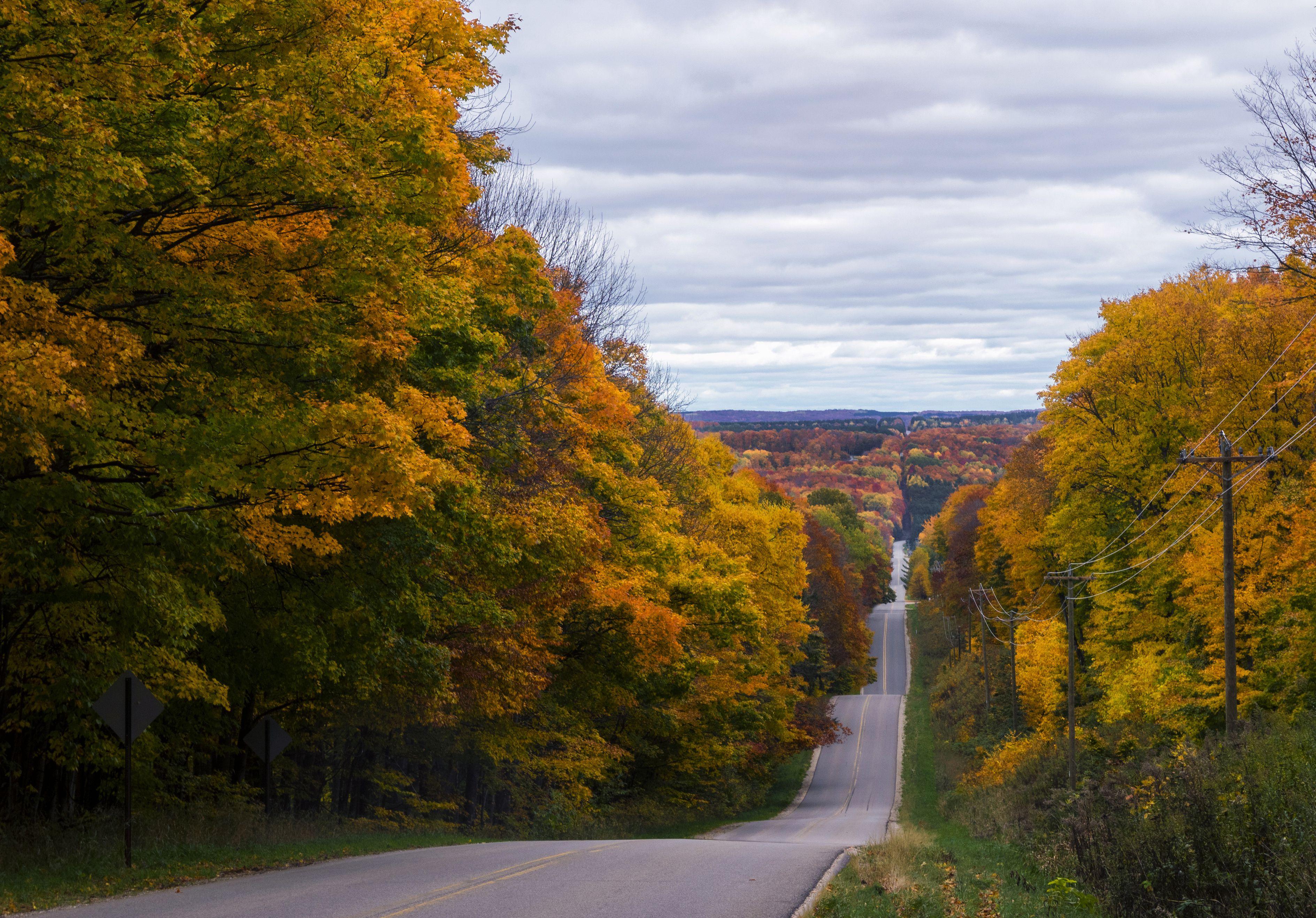 Tree lined road, Autumn, Harbor Springs, Michigan, United States, North America