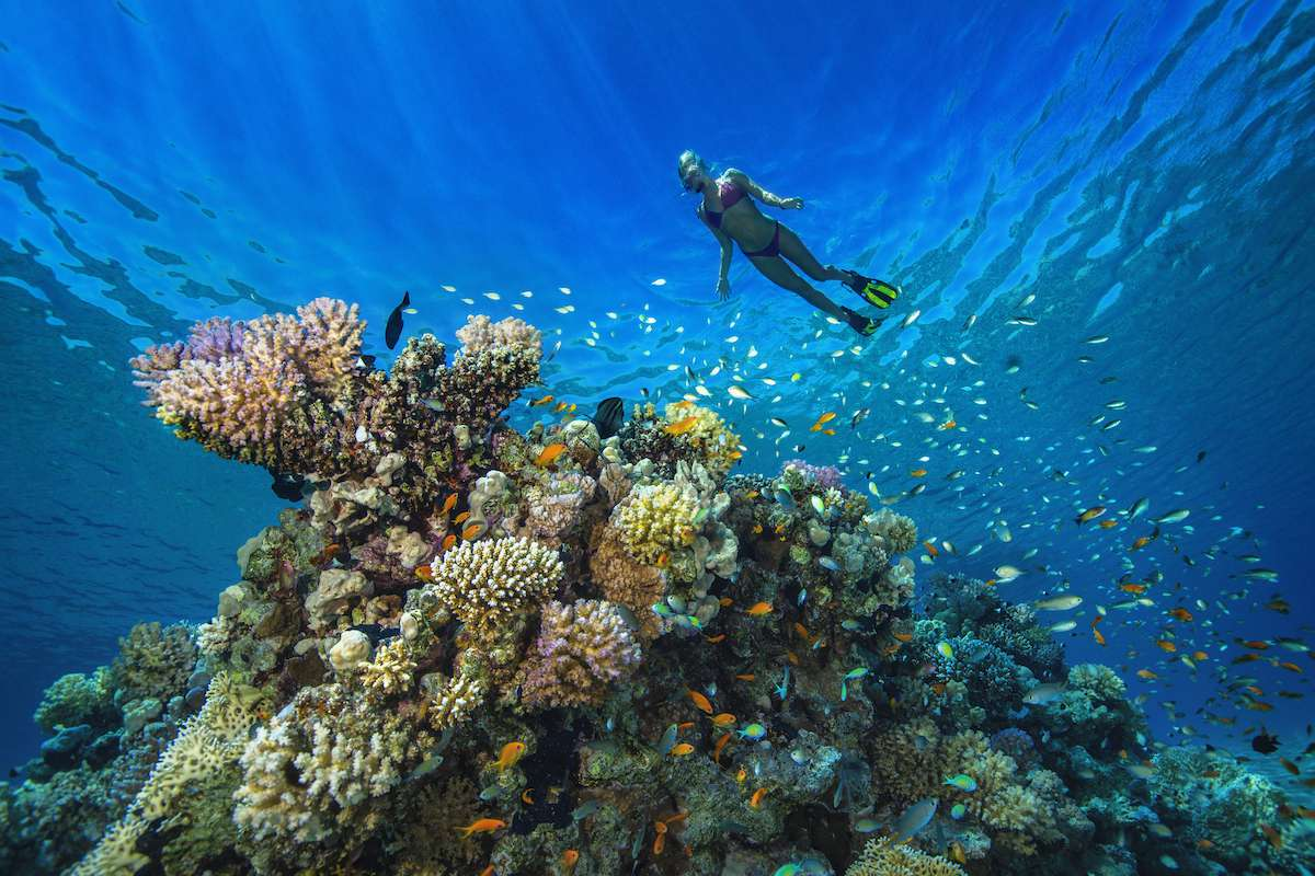 A woman snorkeling over a coral reef