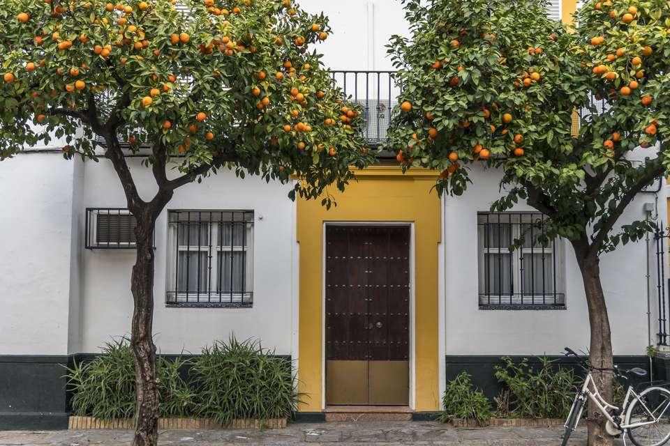 Doorway and orange trees in Barrio Santa Cruz, Seville