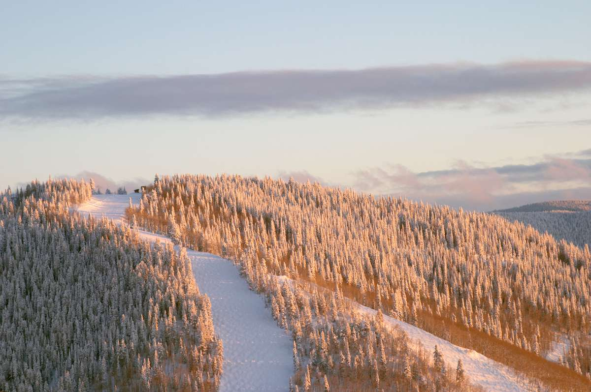 Groomed ski trails cut through a thick forest along a snowy mountain top.
