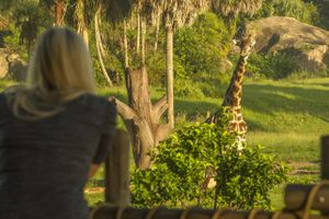 Disney World guest looks out over the savannah at a giraffe in Disney's Animal Kingdom.