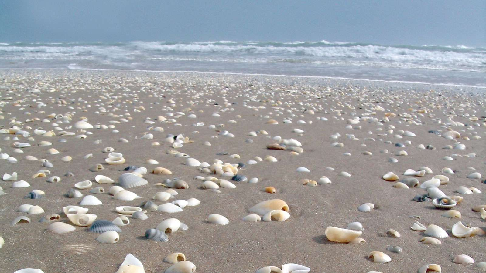 A bunch of seashells in the sand on the shore on San Jose Island in texas