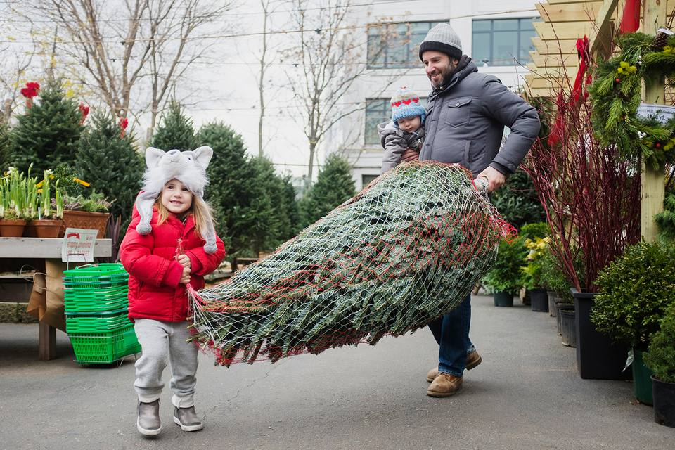 man carrying christmas tree - Cut Your Own Christmas Tree