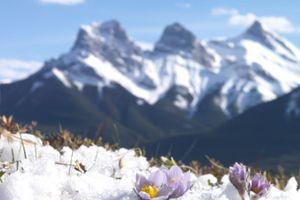 Spring in Banff, Alberta