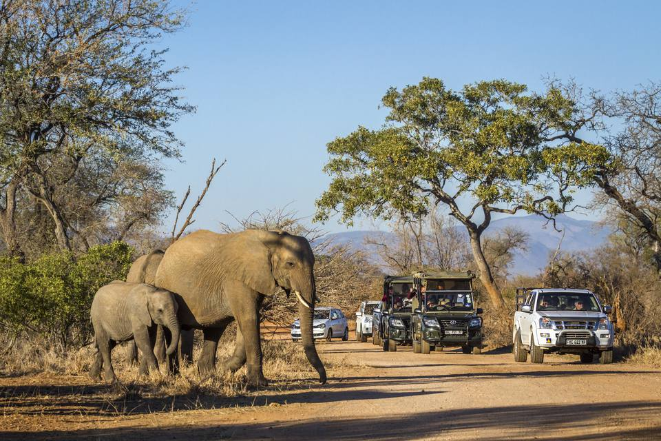 Rental Cars in Kruger National Park, South Africa