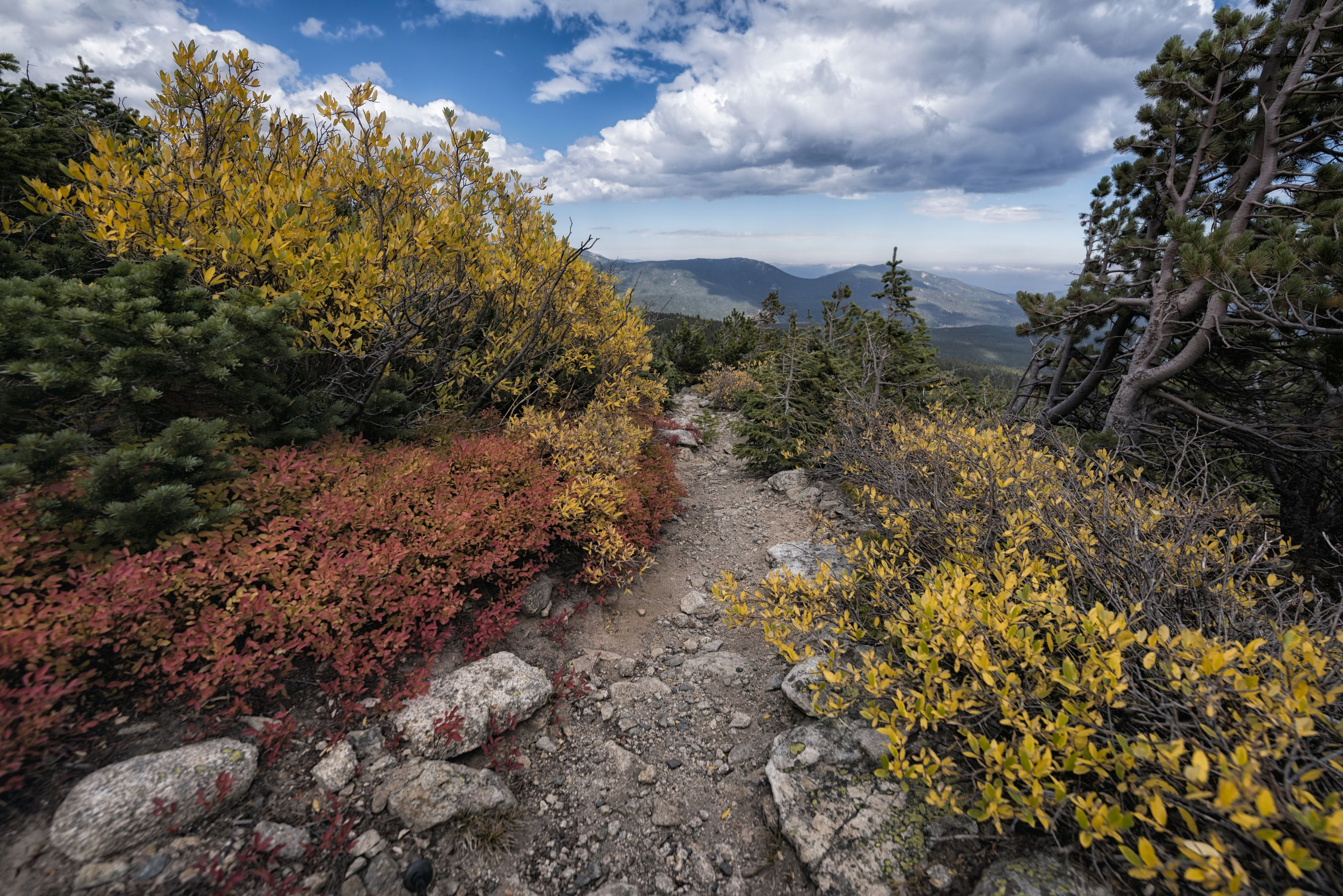 Autumn leaves in mountain landscape