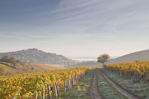 Top French Wine Tours, Regions and Wine Routes