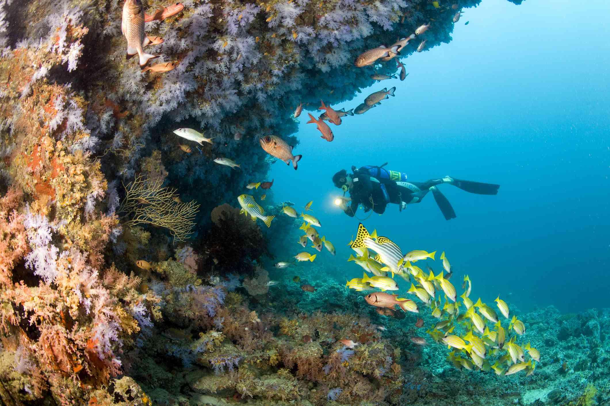 Scuba diving, Ari Atoll, Feridhoo Region, Maldives