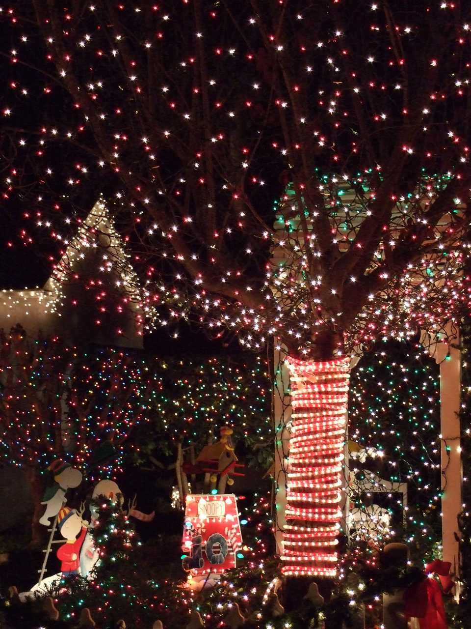 christmas displays on santa rosas walnut