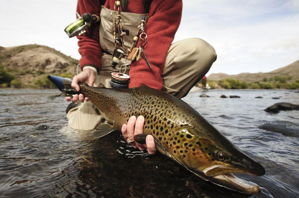 Pesca con mosca en el río Limay, cerca de Bariloche, Argentina.