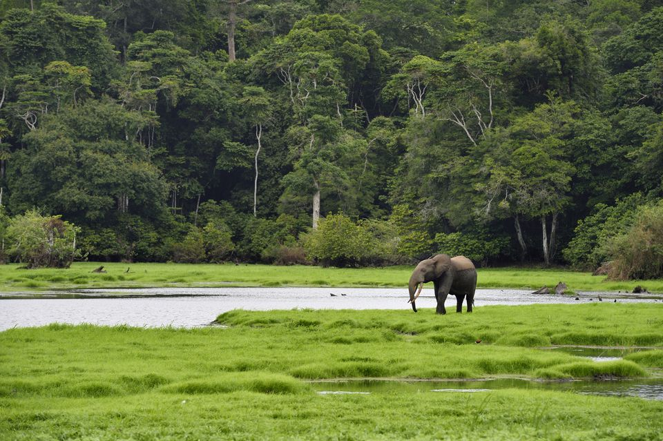 Gabon Travel Guide Essential Facts and Information