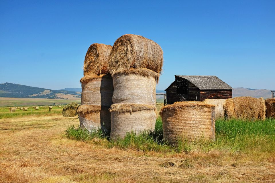 Rolls of Hay in a field near Philipsburg Montana