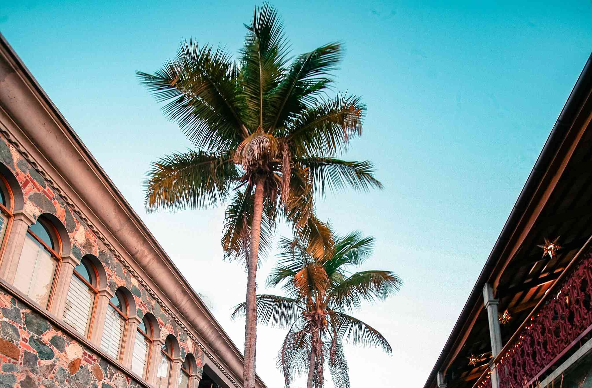 low angle view of palm trees and buildings in Mongoose Junction St. John
