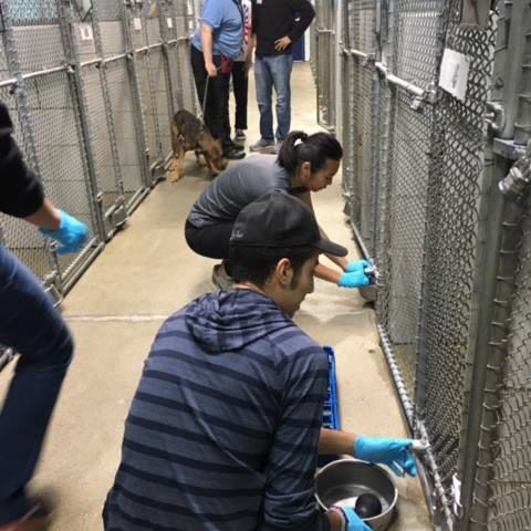 The Best Places in Charlotte to Volunteer With Animals