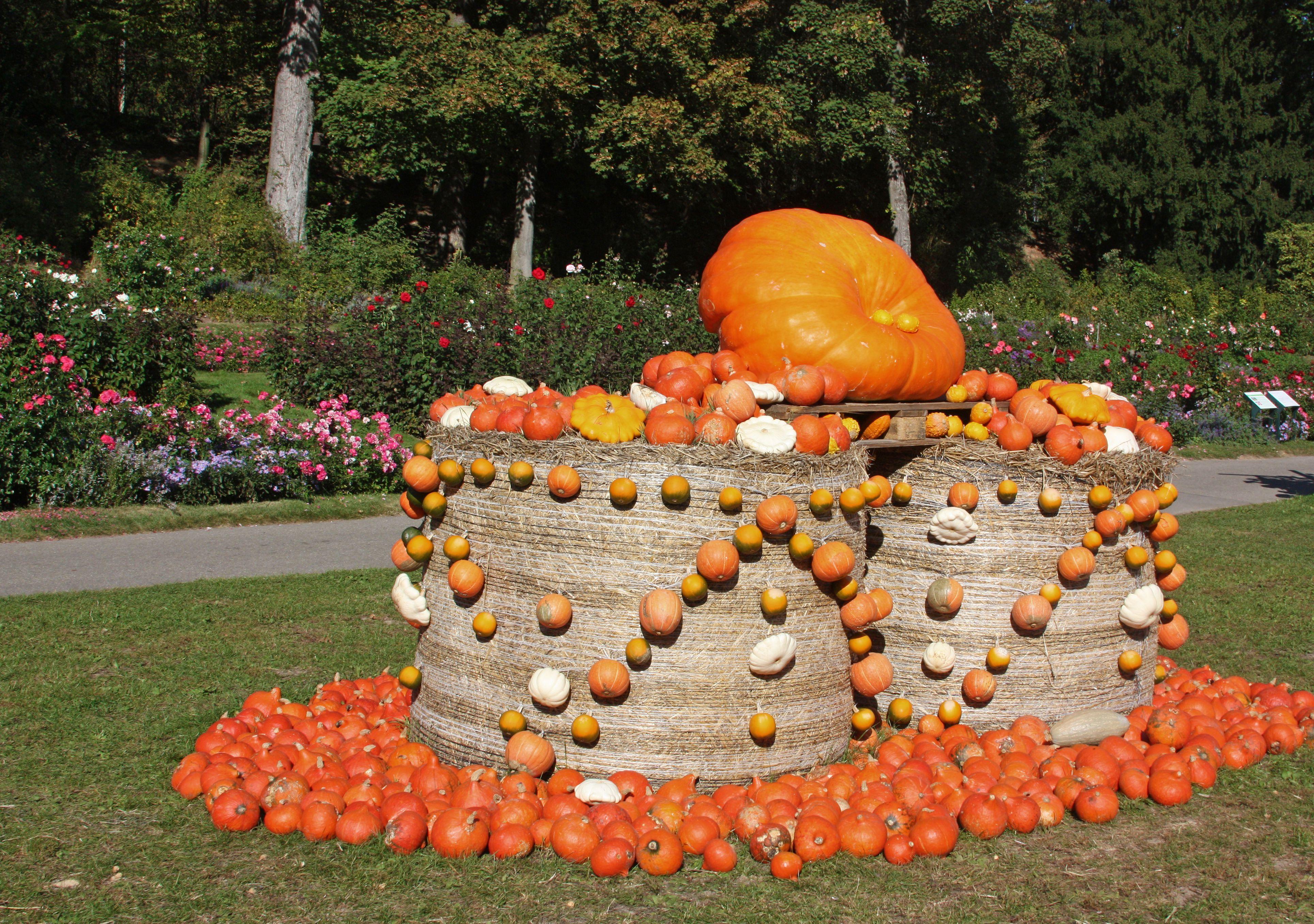 pumpkin in Ludwigsburg,Germany