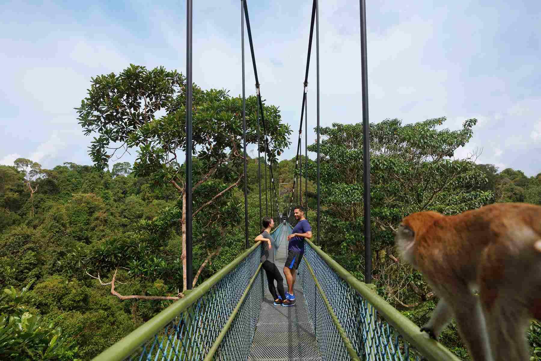 Canopy walk at Macritchie Reservoir Park, Singapore