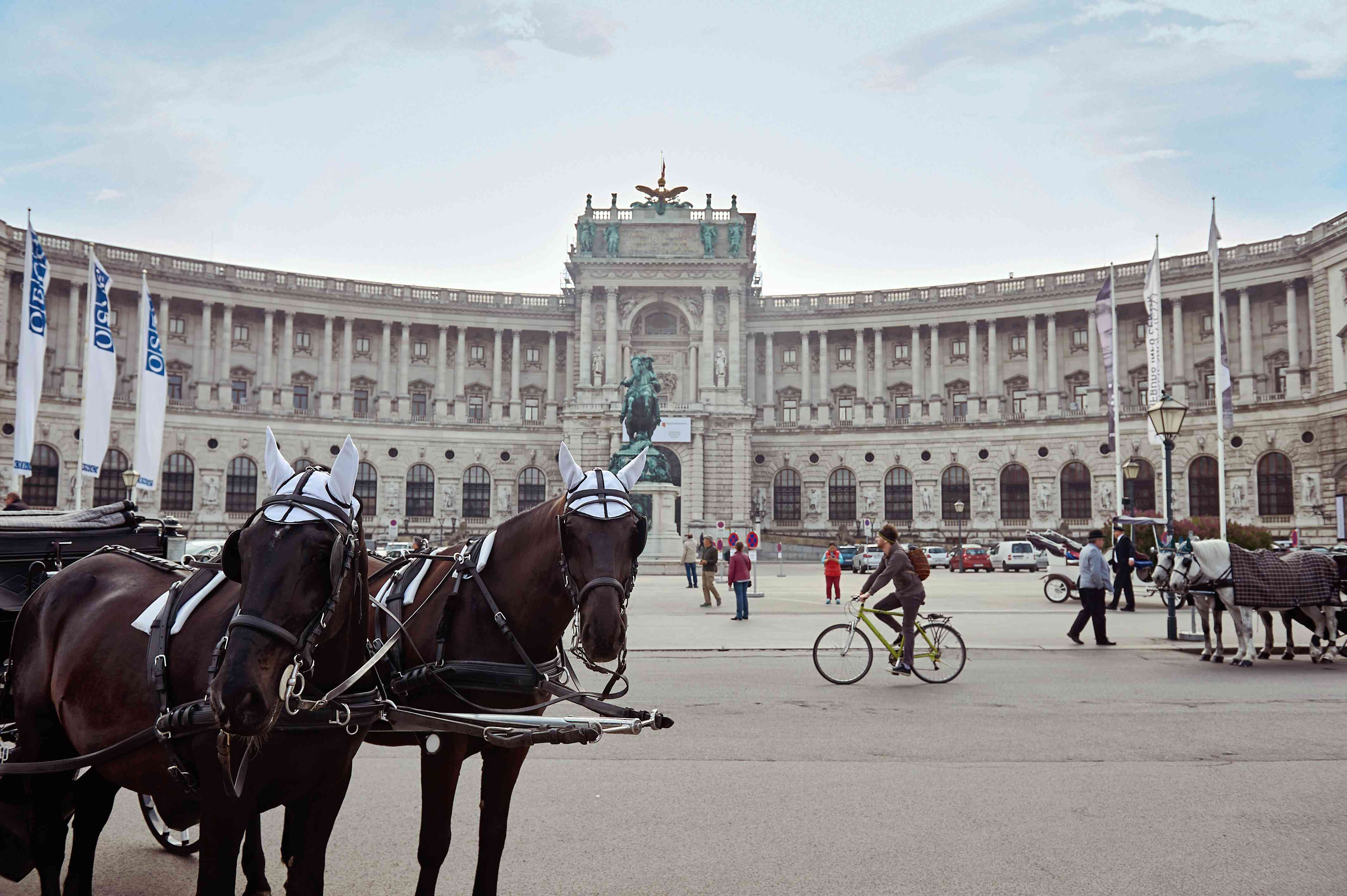 Two horses looking at the camera in front of Hofburg Palace