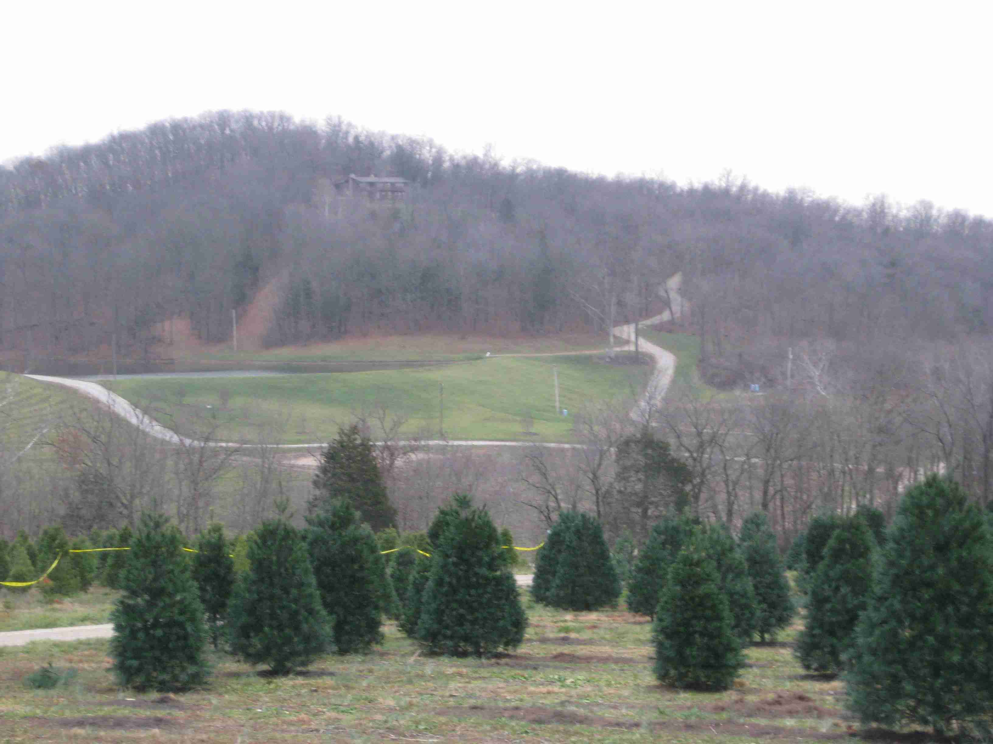 Where To Get A Real Christmas Tree In The St. Louis Area