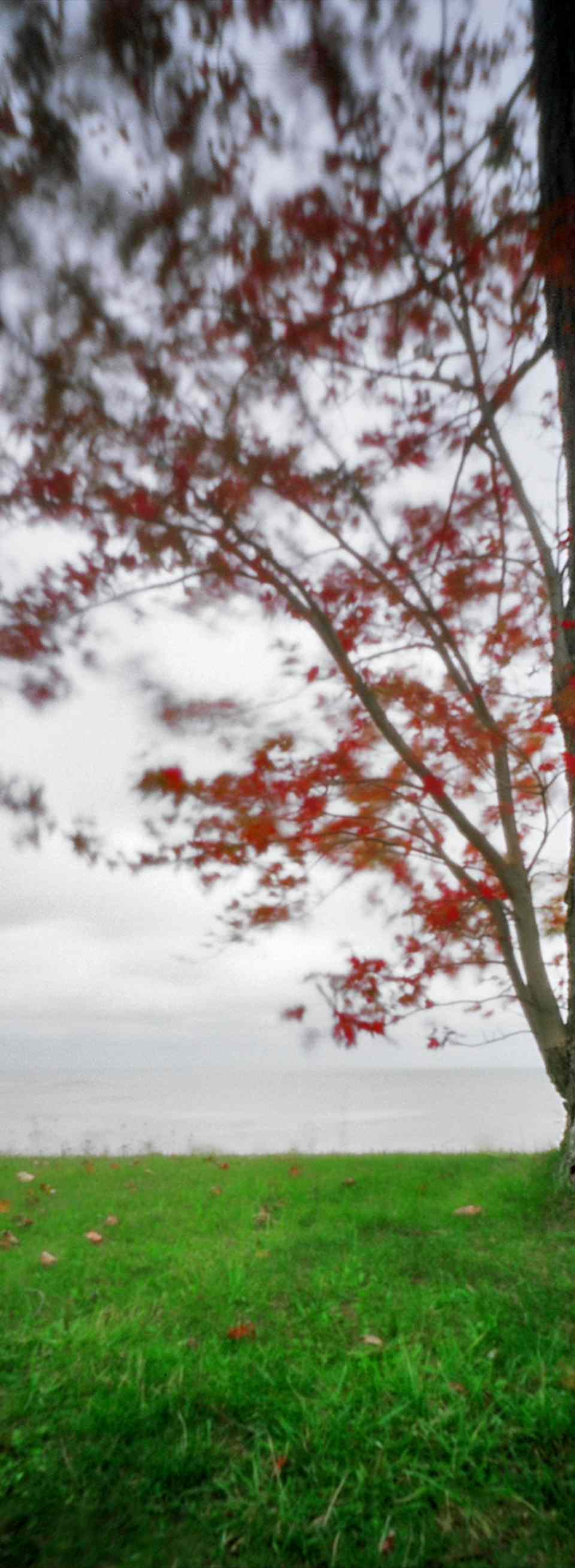 Colorful leaves blowing at Lake Erie shore