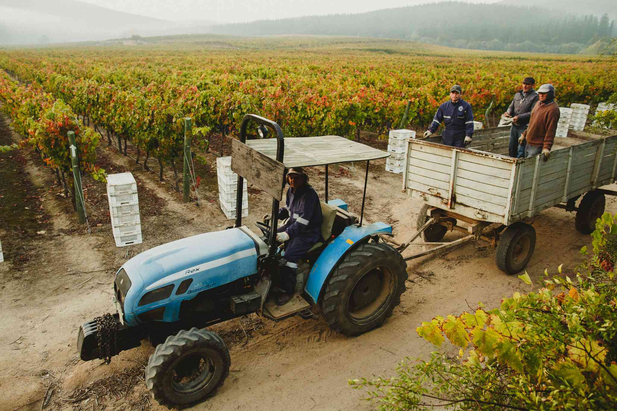 A tractor going through the vineyard